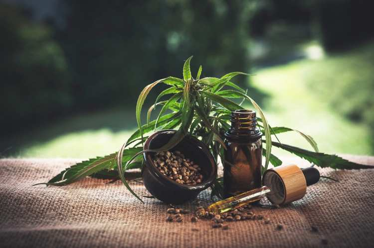 cannabis plant, flower and tincture