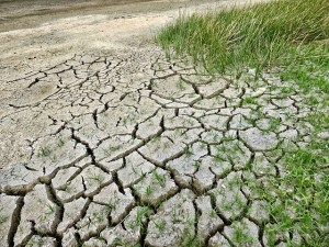 Dry, cracked earth with green grass adjacent