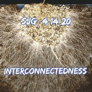 2020-04-14 - Interconnectedness