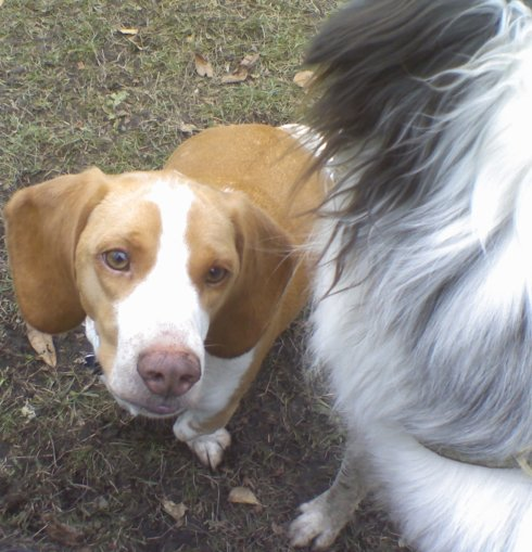 My dogs Daedalus and Willow at the dog park