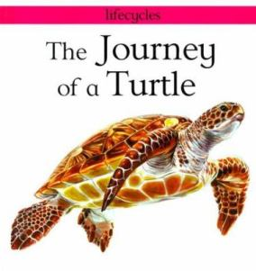 The Journey of a Turtle by Carolyn Scrace