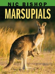 Marsupials by Nic Bishop