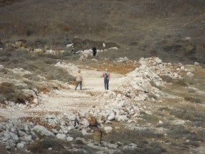 Settlers from Otniel settlement built a new road on land Palestinian shepherd's use to graze their sheep to mark new boundaries for their settlement. Photo EAPPI/B. Rubenson.