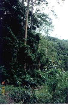 Entering the dark jungle.