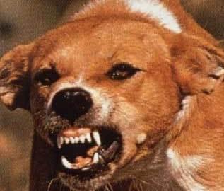 mean_dog