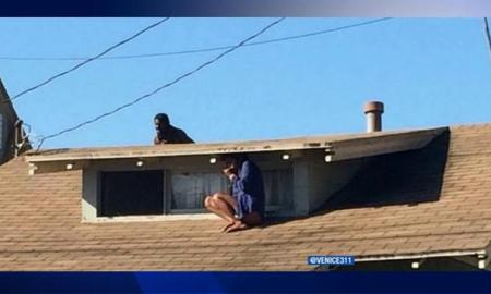 INTRUDER CHASES VENICE RESIDENT ONTO ROOF