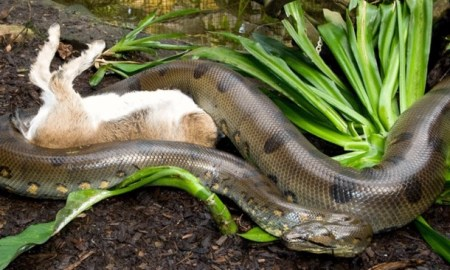 Man Saves His Dog From The Clutches Of A Python Ready To Eat Him