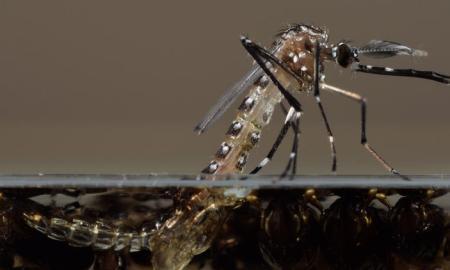 fl-gmo-mosquitoes-florida-keys-20150125-002