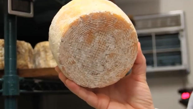 Scientists Create Cheese From The Bacteria Of Human Toes & Belly Buttons