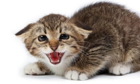 cat-poop-parasite