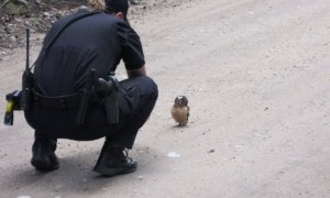 owl and officer