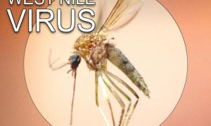 west nile virus