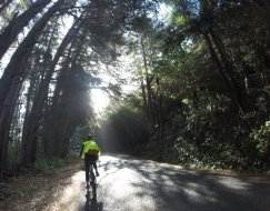 We biked on the road, surrounded by forest, with views of the sounds below