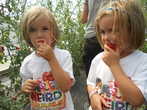 Two small children in a garden bite into tomatoes