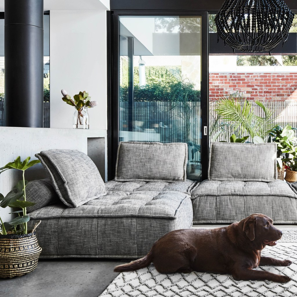 10 Ways to Clear the Air in Your Home dog dander