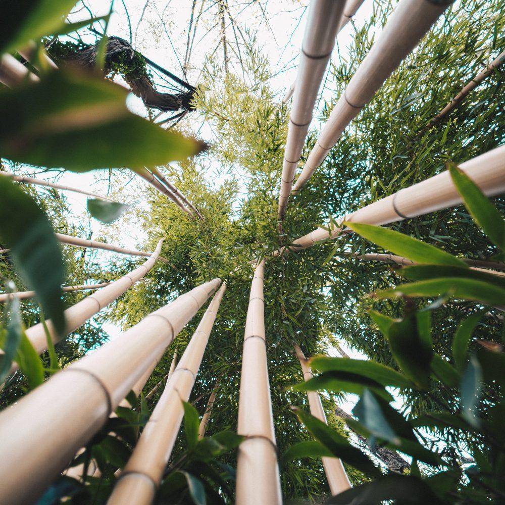 Benefits of Bamboo & Rattan - bamboo