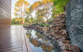 Top 3 Low-Maintenance Plants for Your Garden