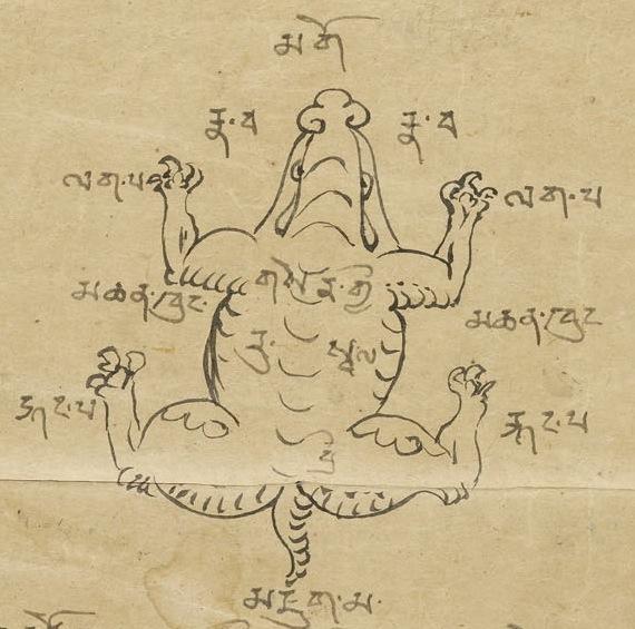 goldentortoise