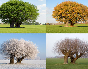 depiction of a tree at each season