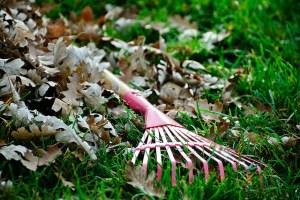 rake lying in grass near fallen leaves