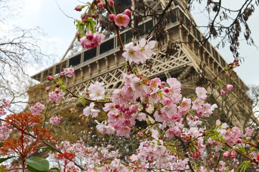 Paris Marathon 2016 Eiffeltower Cherry Blossom