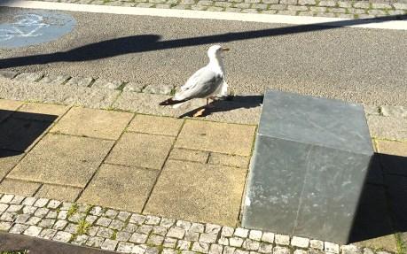 RostockHM Pokemöwe