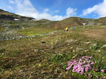 fjaellraeven-classic-flowers
