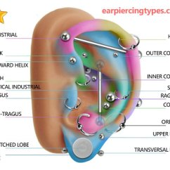 Different Ear Piercings Diagram 1969 Dodge Charger Dash Wiring Piercing Types Most Popular In The World
