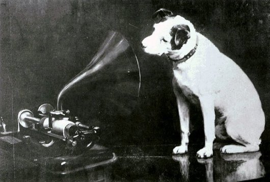 rca perro