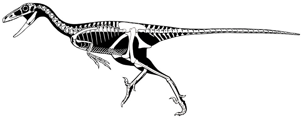 Why there are no reasonable dinosaurs, crows and monkeys