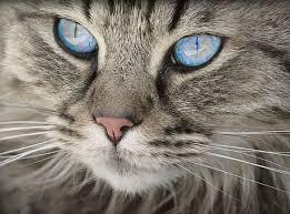 Feline Report