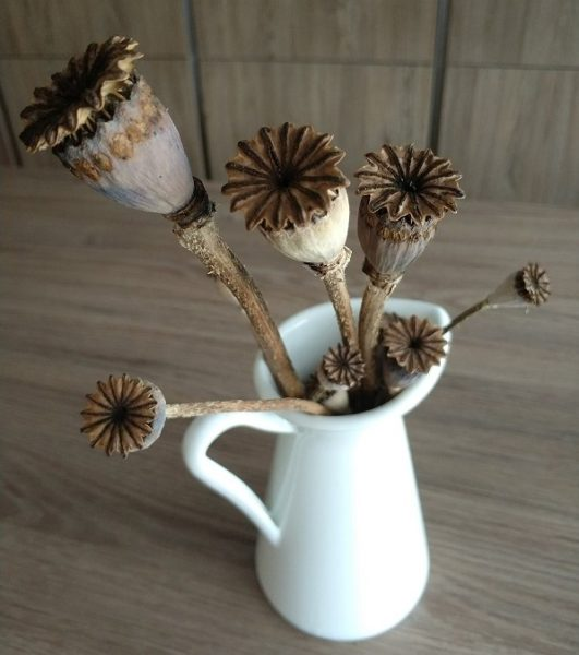 dried poppy flowers in white pitcher