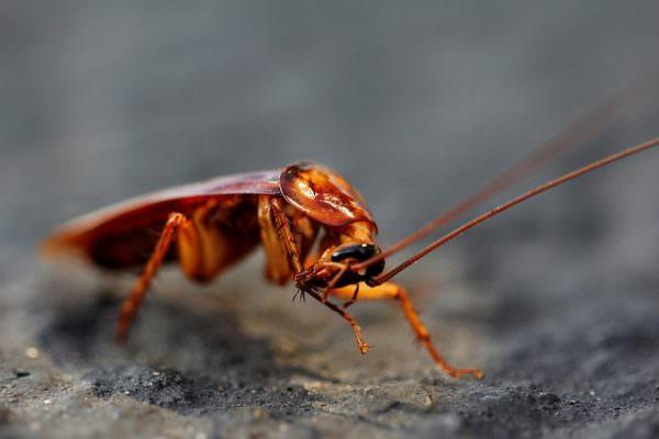 nontoxic pest control