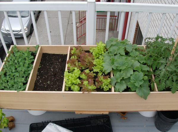 Gardener Tom's bookcase container garden - edible container gardens