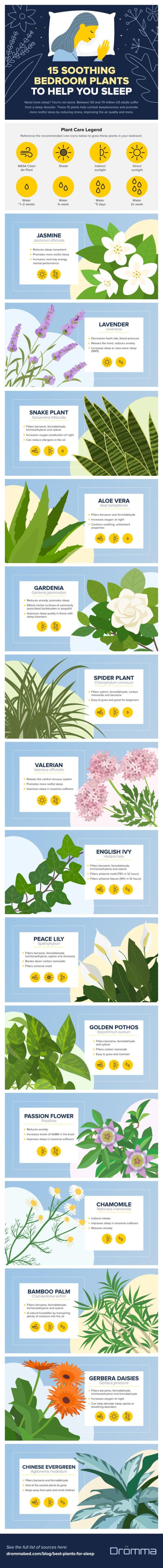 Infographic: 5 Soothing Bedroom Plants to Help You Sleep