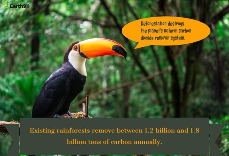 Rainforests remove 1.2-1.8 billion tons of carbon annually