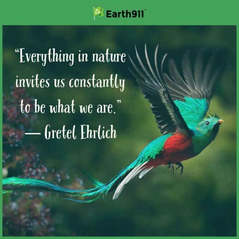 """Everything in nature invites us constantly to be what we are."" -- Gretel Ehrlich"