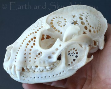 Hand carved raccoon skull
