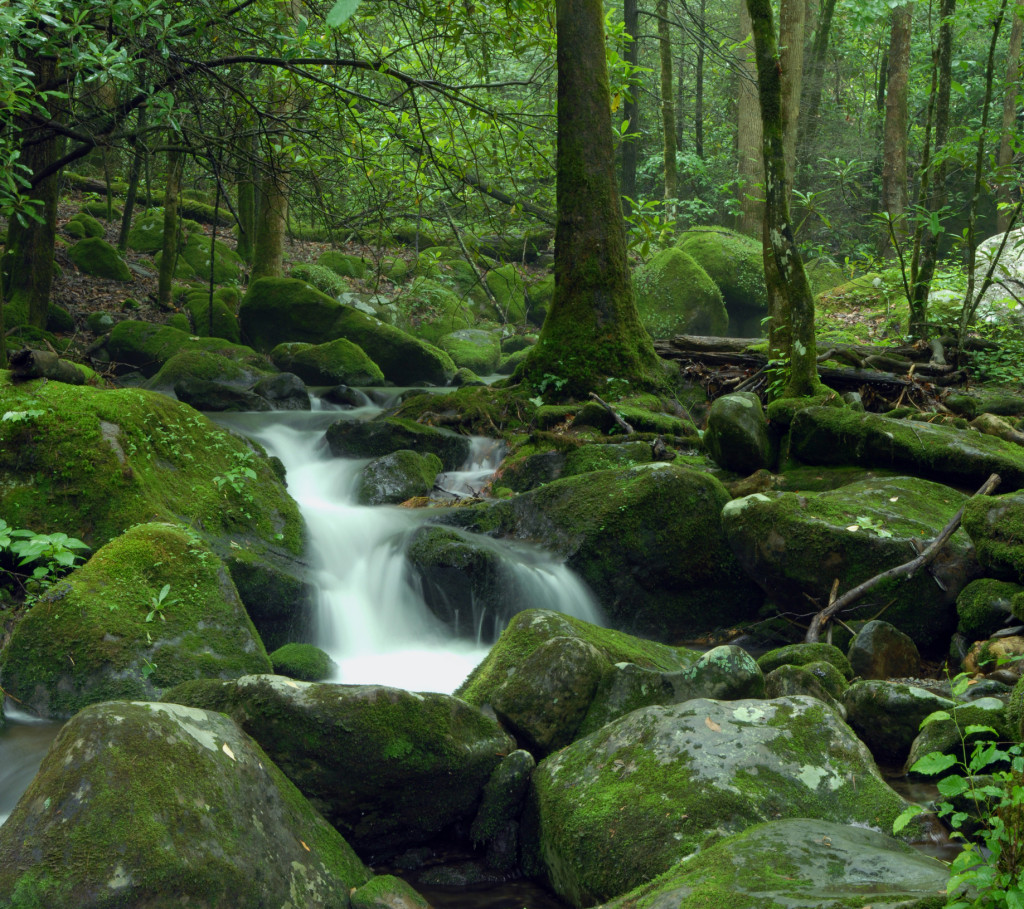 Tnc Releases New Report On Values Of Source Water Protection