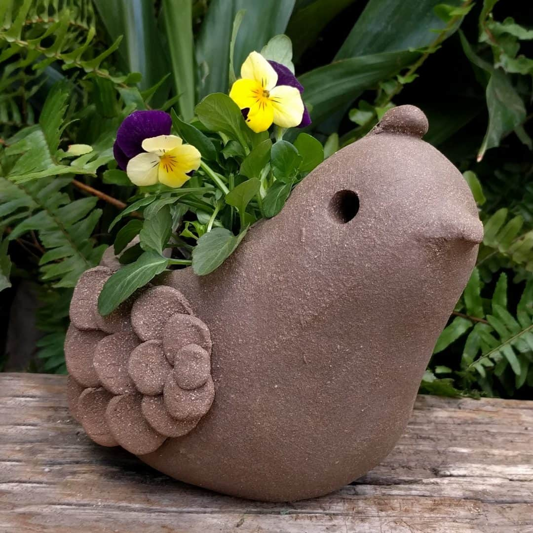 quail_planter_young_flowers_outside_4