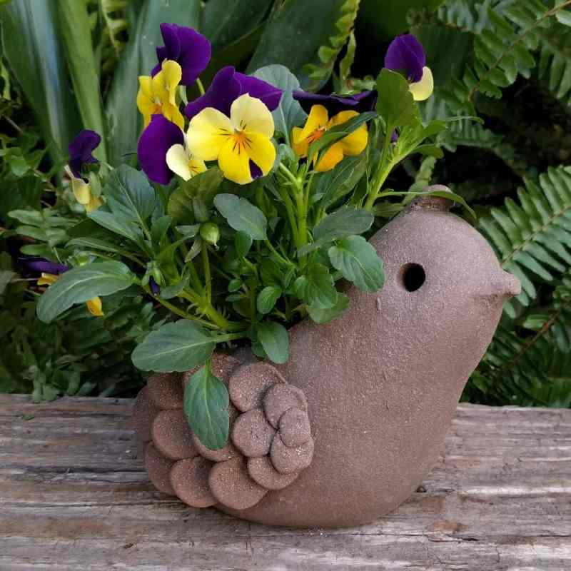 quail_planter_young_small_green_1024_09