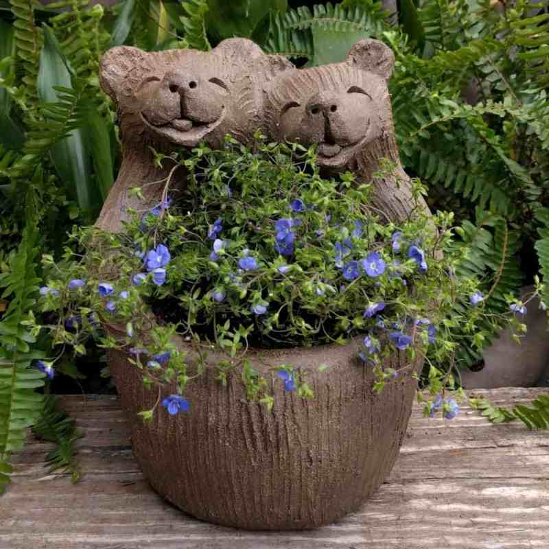 bear_lovers_planter_flowers_greenspace_10