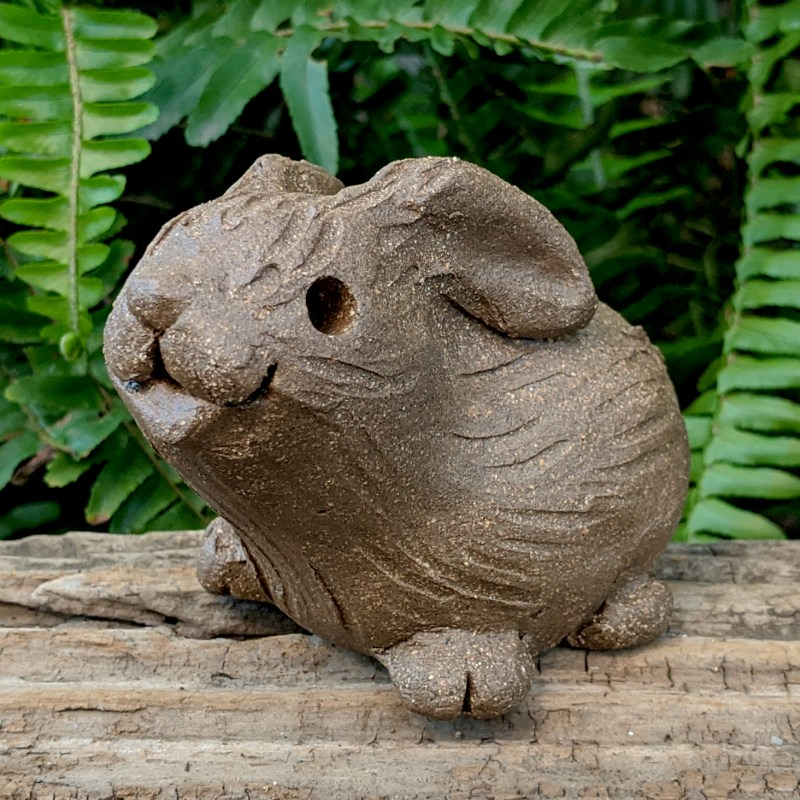 small-rabbit-floppy-ears-9
