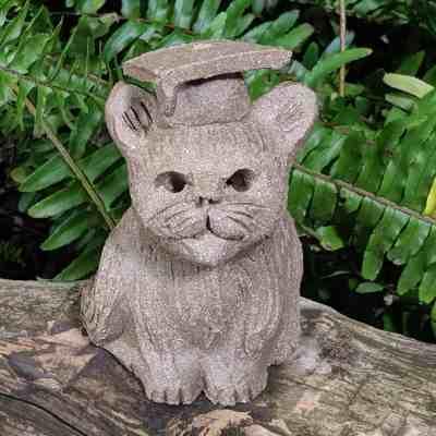 graduate-cat-small-1