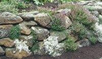 Rock Wall Garden Plants