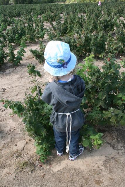 Little Buddha, berry farmer