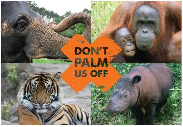 Conservation Fitness Program, Day 16: Paleo and Palm Oil