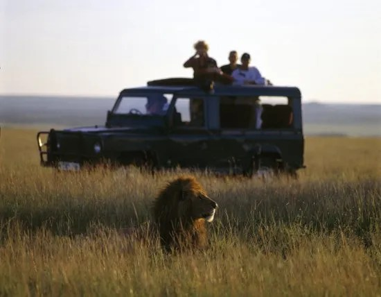 People-on-safari-and-lion
