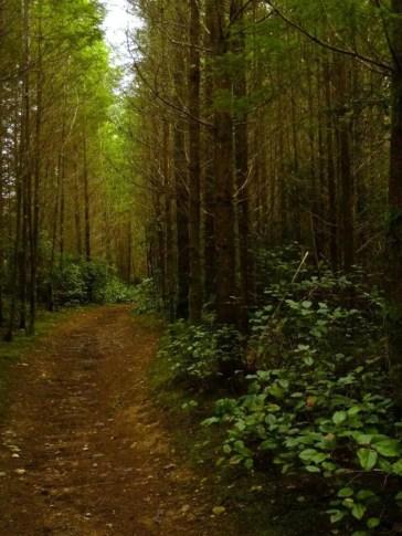 Putney-Woods-Trail