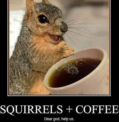 squirrel caffeine coffee hammy over the hedge dear god no